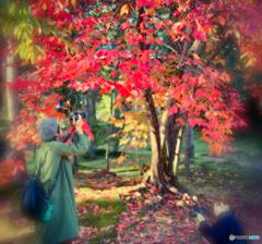 秋色を探す