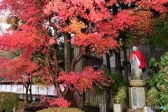 和歌山県高野山の紅葉④