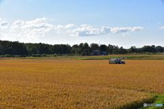 北海道の稲刈