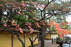和歌山県高野山の紅葉①