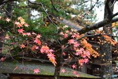 和歌山県高野山の紅葉②