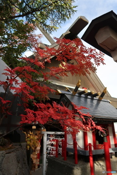 富士山五合目の紅葉
