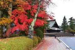 和歌山県高野山の紅葉③