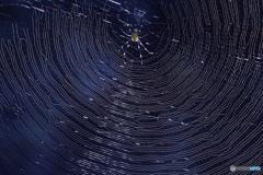 拡大して見てください。幻想的なクモの巣