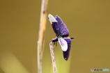 秋の気配 蝶トンボ