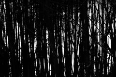 湖のほとりの竹たち