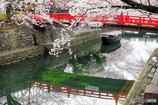 水門川さくら2