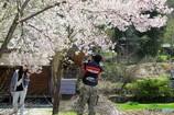 桜を撮る人、観る人1