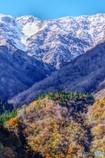 紅葉と冠雪1