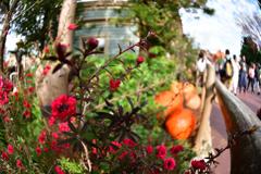 取り敢えず『秋』 …秋の装い2018