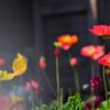 花の色は うつりにけりな いたづらに わが身世にふる ながめせしまに