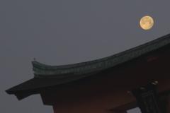 鳥居と月と鳥 厳島神社