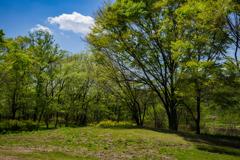 初夏を迎える昭和の森