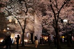 夜桜にとどけ