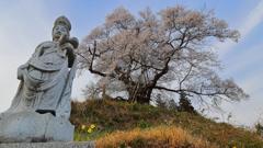 空へはばたく彼岸桜 Ⅱ