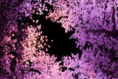 空一面の桜道
