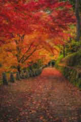 奈良 - 吉野山 紅葉