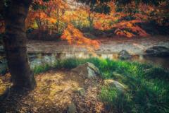 大阪 - 万博公園  紅葉