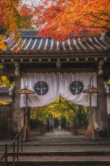 京都 - 光明寺 紅葉