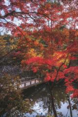 兵庫 - 神戸森林植物園