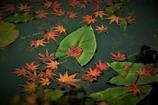 浮かぶ秋色♪