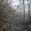 朝霧の下山道
