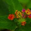 温室の花 3
