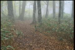 霧に包まれて (2000年) 6