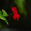 温室の花 4