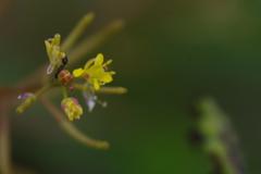野花とアリ
