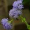 温室の花 2