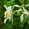 温室の花 1