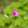 春の草花 5