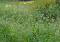 RICOH IMAGING PENTAX K-3で撮影した(公園の池)の写真(画像)