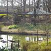 池からの風景 2