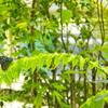 温室内の蝶 2