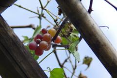 秋の味覚 1
