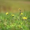 野の花 2002,5,26