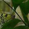 温室の蝶 5