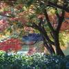 日本庭園の秋 4