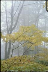 霧に包まれて (2000年) 3