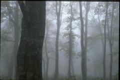 霧に包まれて (2000年) 5