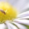 小さな昆虫