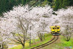 桜トンネル#2