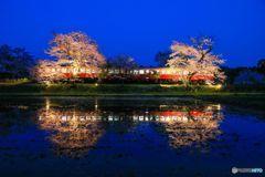 夜桜お七???