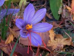 枯葉散る庭に咲く