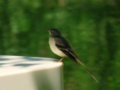 ケラ池の鳥