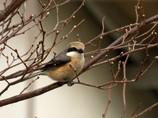 最近散歩中に出会った野鳥6