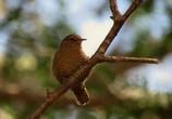 最近散歩中に出会った野鳥3