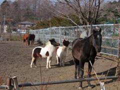 乗馬クラブの馬達